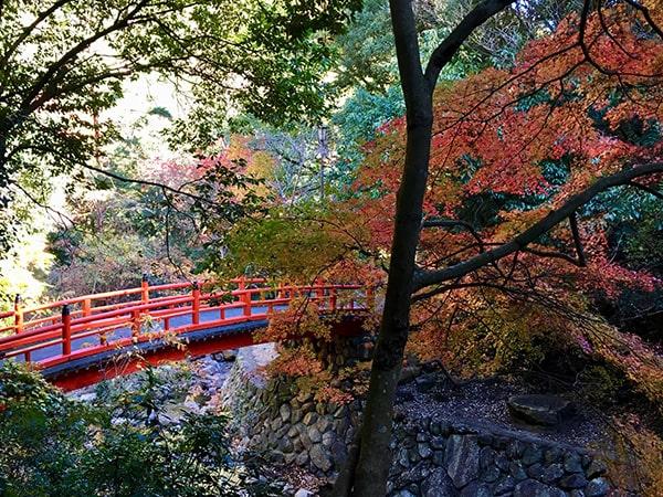 赤い欄干の橋と紅葉