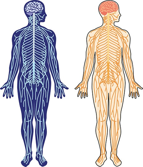 人の体に張り巡らされた無数の神経