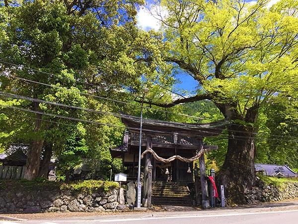 広瀬神社の巨木と鳥居
