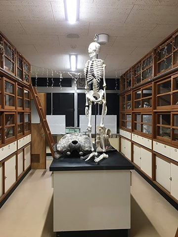 理科室の人骨模型