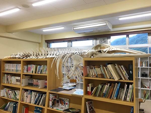 ミンククジラの骨