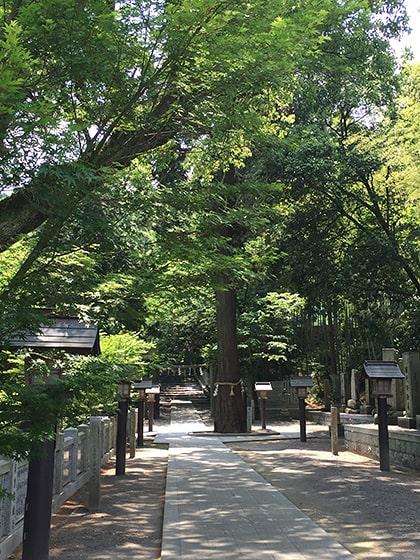 石鎚神社の御神木